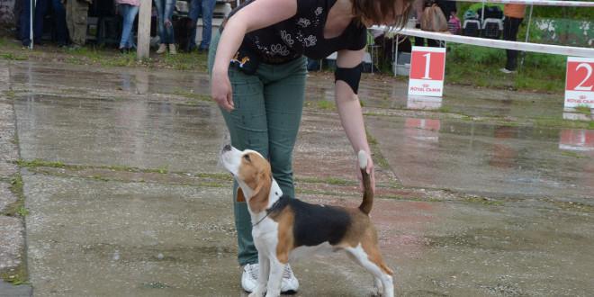 Beagle-03-04