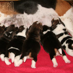 puppies_1week_all