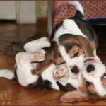 puppy_40d_5