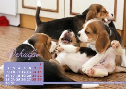 Ежегодный календарь питомника Барстэйл