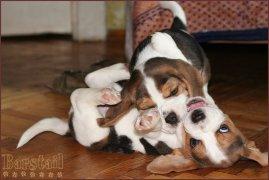 image puppy_40d_5-jpg