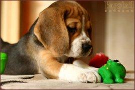 image puppy_49d_arik7-jpg