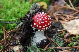 Лес, грибы, бигли... 2013