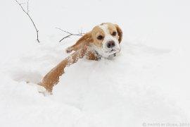 Зима весной?! 23 марта 2013